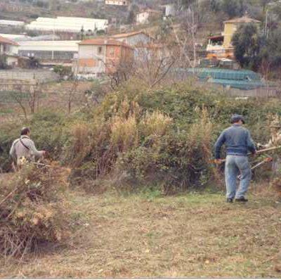 Foto 2 - disboscamento