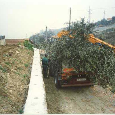Foto 20 - trasporto ulivi